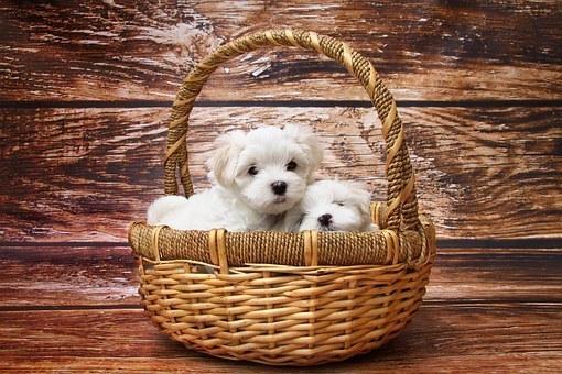 dog-1027549__340 (1).jpg