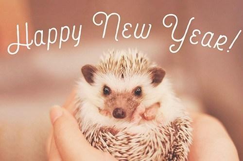 happy_newyear-19.jpg