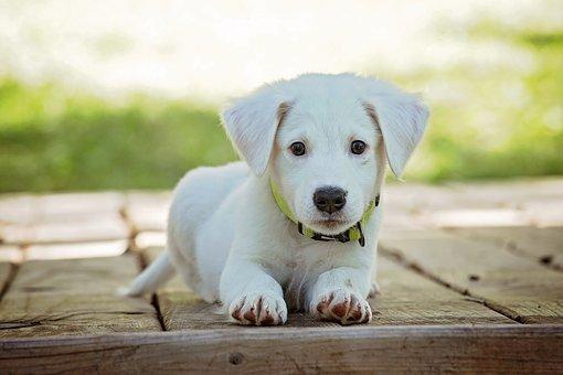 puppy-1903313__340.jpg